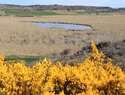 La Laguna de Madrigal en Paredes de Sigüenza, lugar estratégico para las aves acuáticas en la Sierra Norte