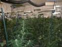 La Policía Nacional pone en jaque a los traficantes del entorno rural de Toledo con un nuevo golpe al cultivo de marihuana
