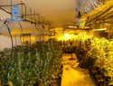 La Policía Nacional desmantela un cultivo de 804 plantas de marihuana en Nambroca