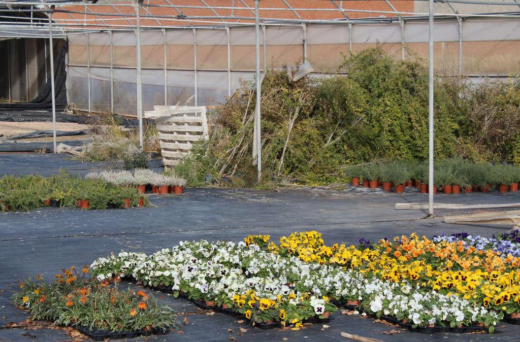 Comienza el curso de jardiner a para personas con for Aprender jardineria