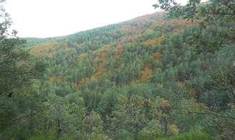 Parque Natural del Hayedo de Tejera Negra. Senda de Carretas