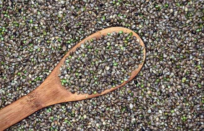 Semillas de cannabis y qué tipos de beneficios nutricionales aportan