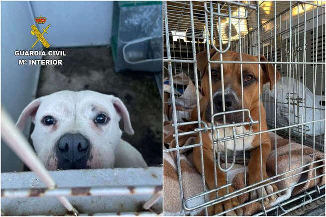 La Guardia Civil rescata a dos perros abandonados en Escalona (Toledo)