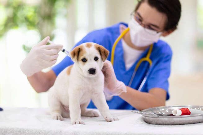 Los veterinarios de Castilla-La Mancha insisten en la importancia de vacunar a los animales de compañía frente a la rabia para garantizar la salud pública