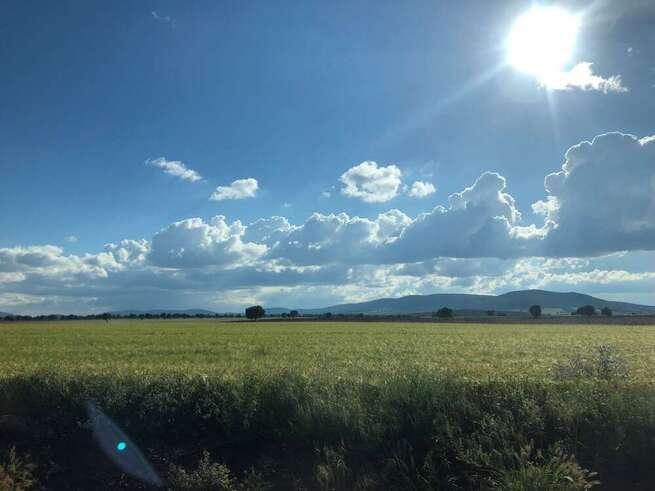El Gobierno de Castilla-La Mancha ha abonado más de 16 millones de euros a los agricultores y ganaderos de la provincia de Ciudad Real