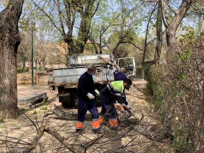 Continúan en Toledo los trabajos de limpieza y recuperación de árboles y zonas verdes afectadas por Filomena con criterios de seguridad