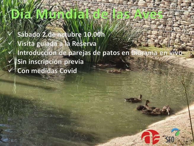 El sábado se introducirán varias parejas de patos en el diorama en vivo de la Reserva Ornitológica de Azuqueca