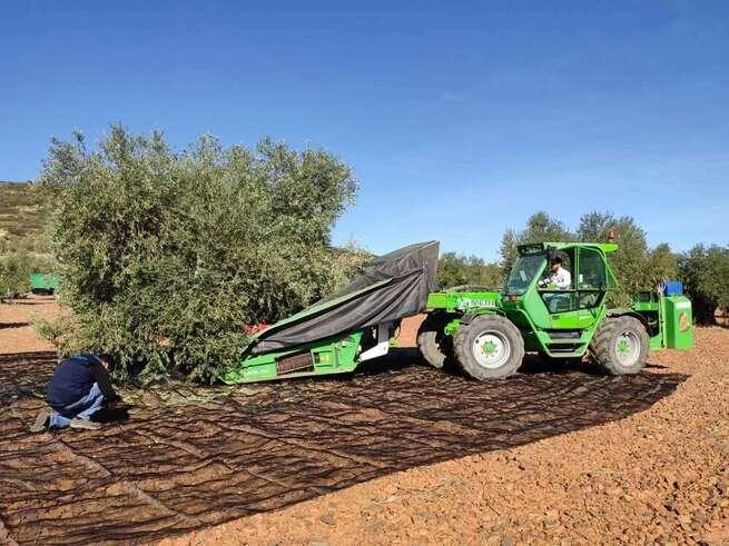 """ASAJA Toledo denuncia que los olivareros con seguro aún no han podido solicitar las ayudas de """"Filomena"""""""