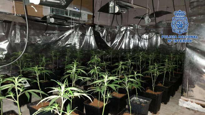 La Policía Nacional detiene a un joven de Talavera de la Reina que utilizaba un piso embargado para el cultivo de marihuana