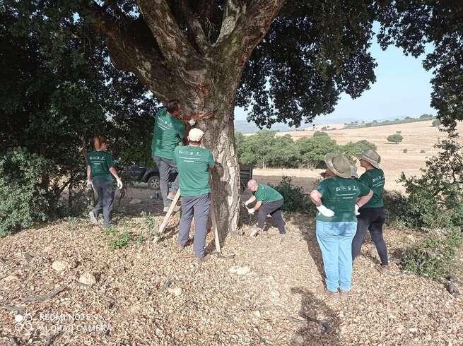 Desempleados de Viso del Marqués realizan labores de descorche y aprovechamiento forestal en la Sierra viseña