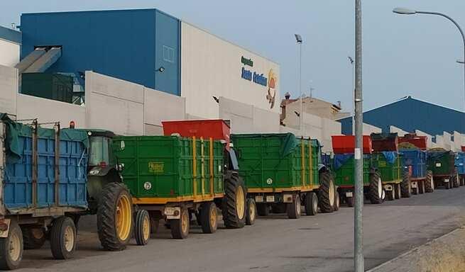 La Cooperativa 'Santa Catalina' de La Solana moltura 40 millones de kilos en una vendimia sin sobresaltos