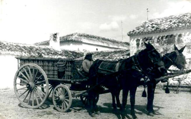 """Una historia real del Ciudad Real de principios del siglo XX """"La mula cariñosa"""""""