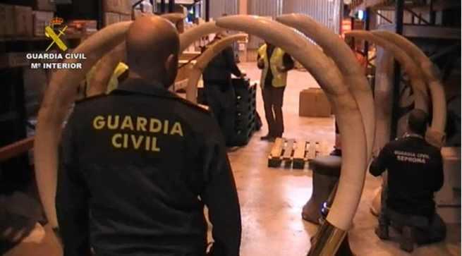 La Guardia Civil interviene una importante cantidad de trofeos de caza y animales naturalizados ilegales en Guadalajara