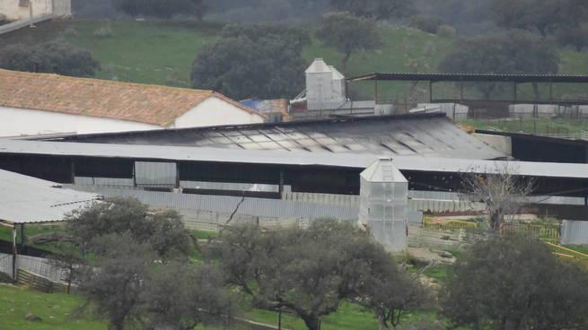 Mueren varias cochinas en cría y lechones en el incendio de una nave de explotación ganadera en Mestanza