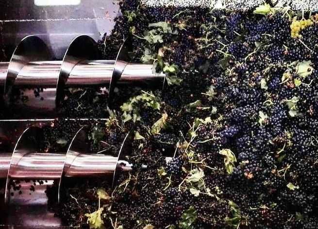 El Progreso recogerá más de 60 millones de kilos de uva la presente vendimia, que tiene previsto acabar esta semana