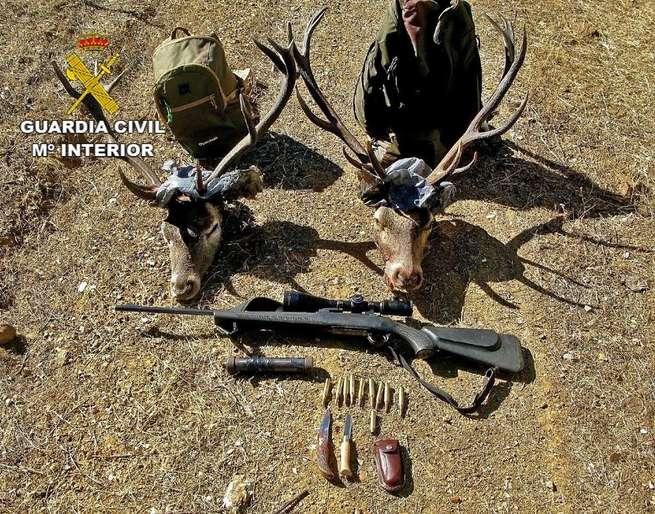 Dos detenidos por cazar de forma furtiva dos ciervos en Almodóvar del Campo (Ciudad Real)