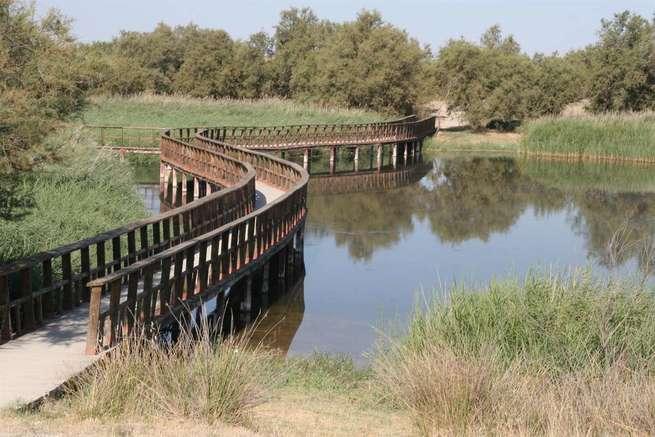 El encharcamiento de Las Tablas de Daimiel sufre descenso de 800 hectáreas durante el verano