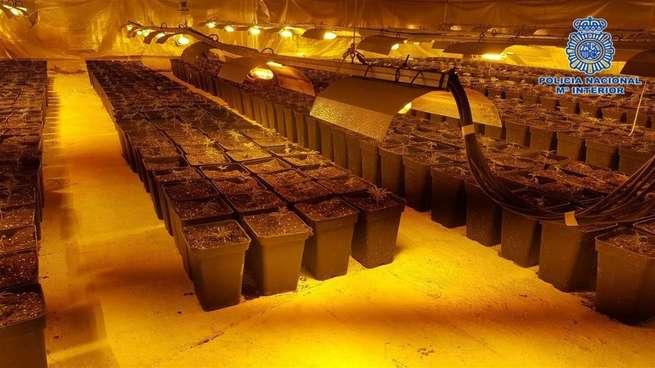 Detenido por el cultivo de más de 1.100 plantas de marihuana en una nave cerca de Talavera de la Reina