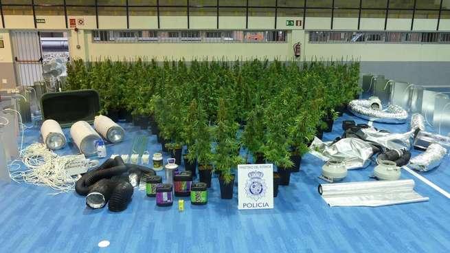 Detenido en Magán (Toledo) por el cultivo de 269 plantas de 'cannabis sativa' en una vivienda de la localidad