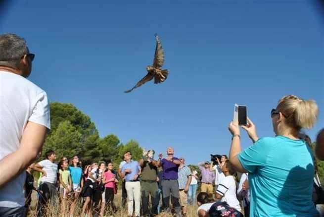 Cuatro búhos reales y un águila calzada, devueltos a su hábitat en Sisante (Cuenca) tras meses de recuperación