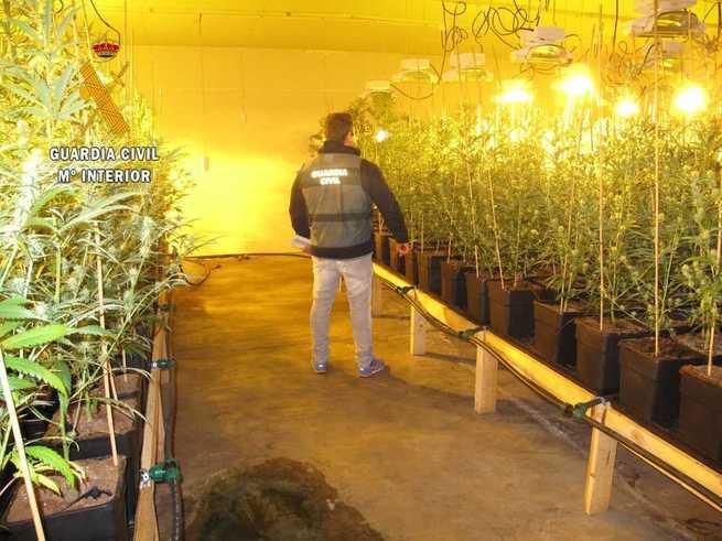 Incautadas 2.685 plantas de marihuana en dos naves de la localidad de Menasalbas (Toledo)