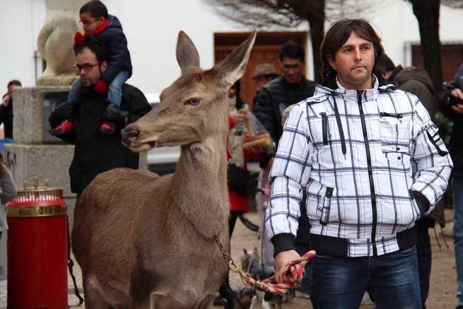 Alcázar de San Juan: El patrón de los animales salió en procesión a pesar del mal tiempo