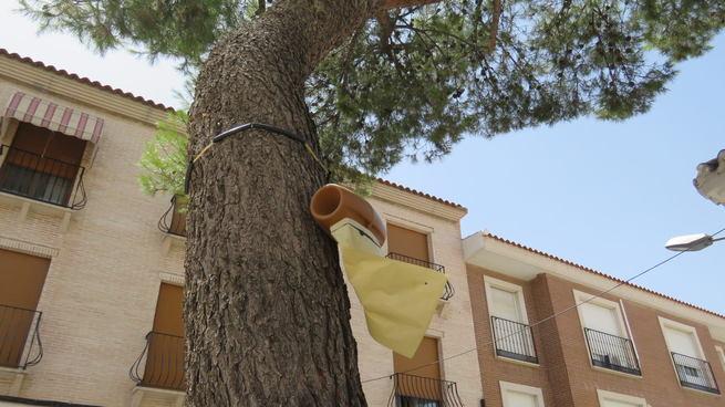 Trampas ecológicas para controlar en Manzanares la procesionaria del pino