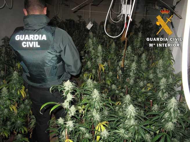 La Guardia Civil desmantela tres plantaciones de marihuana e incauta 518 plantas en la provincia de Toledo