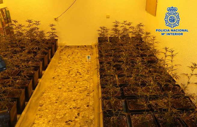 La Policía Nacional detecta en Nambroca una vivienda que estaba siendo utilizada por los inquilinos como centro de cultivo de marihuana