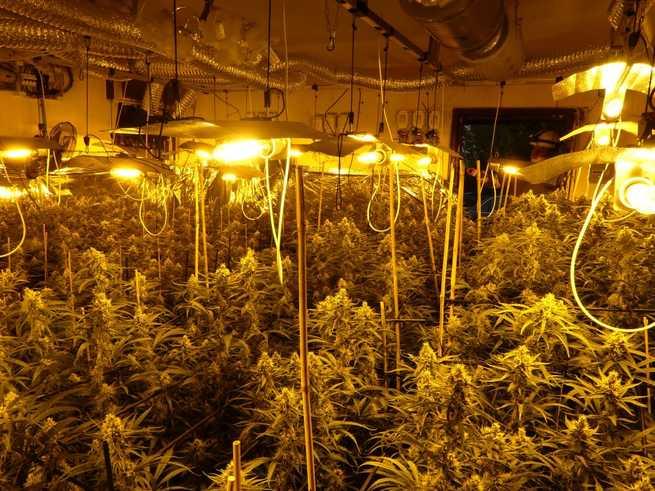 La Policía Nacional desmonta tres laboratorios clandestinos de marihuana asentados en Yuncler, Bargas y Olías del Rey