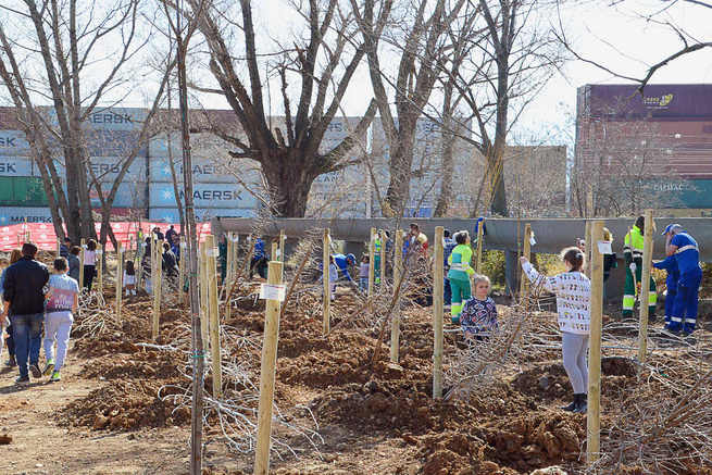Plantados 150 árboles en el nuevo parque Arroyo del Vallejo de Azuqueca
