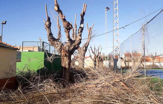 El arbolado del casco urbano de Argamasilla de Calatrava ha sido objeto de poda por parte de especialistas en estos trabajos