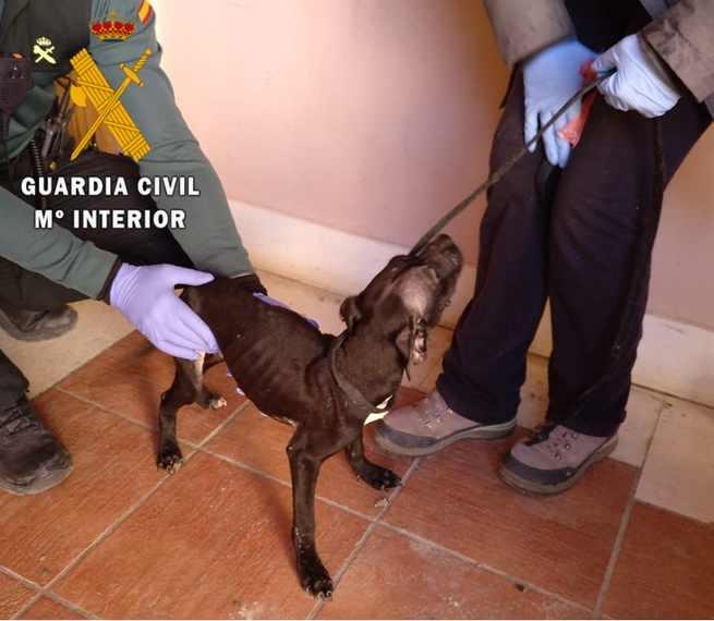 Investigada una persona en Ocaña por maltratar a cuatro perros y causar la muerte a uno de ellos