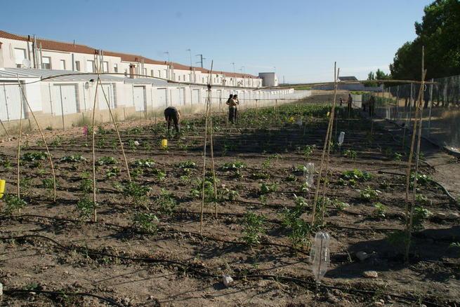 Imagen: La alcaldesa de Socuéllamos visita el huerto ecológico de la escuela de agroecológica