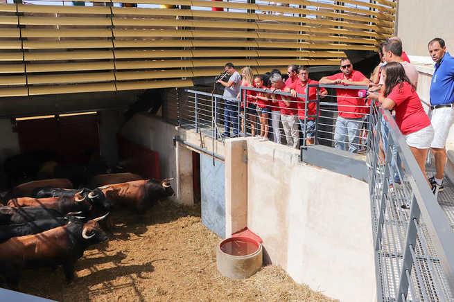 'San Juerguines' han lanzado hoy el chupinazo del segundo encierro