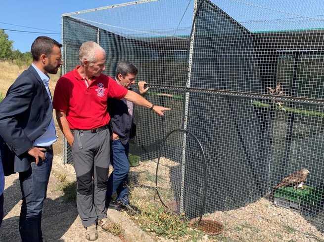 El Gobierno de Castilla-La Mancha respalda la recuperación de aves rapaces en la región