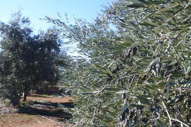 El Gobierno regional avanza con la Confederación del Guadalquivir en el proyecto de regadío para más de 1.200 agricultores del Campo de Montiel