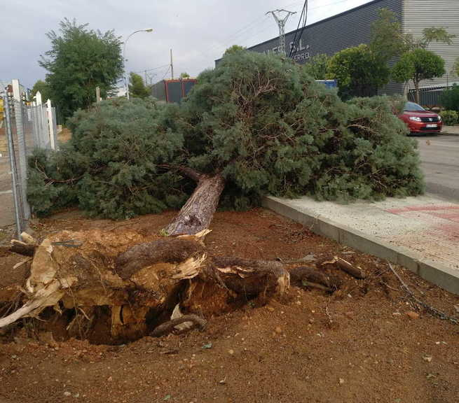 Valdepeñas registra varias incidencias por viento huracanado