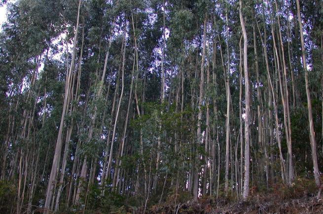 Imagen: Geacam adjudica la eliminación de residuos forestales por 390.000 euros
