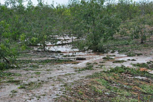 Imagen: Asaja pide declarar Zonas de Actuación Especial las comarcas dañadas por clima