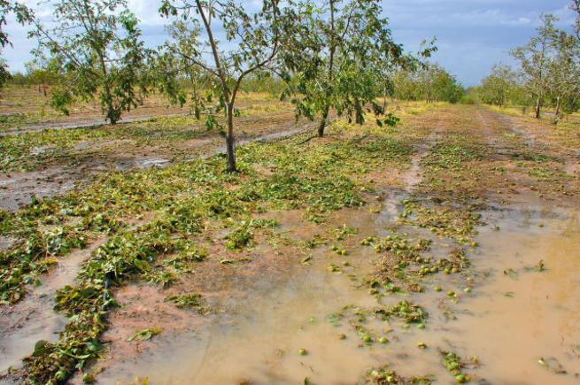 Imagen: Asaja pedirá la declaración de zona catastrófica para municipios afectados por las tormentas