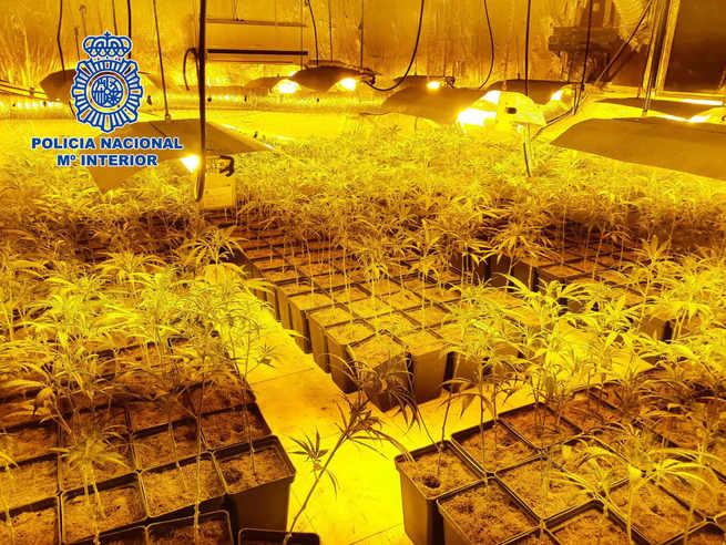 """Desarticulada un clan familiar dedicado """"profesionalmente"""" al cultivo de marihuana asentado en Talavera de la Reina"""