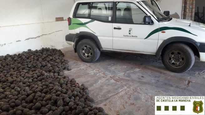 Agentes Medioambientales decomisan más de 600 kilos de piñas recolectadas de forma irregular en montes públicos de la zona de Piedrabuena