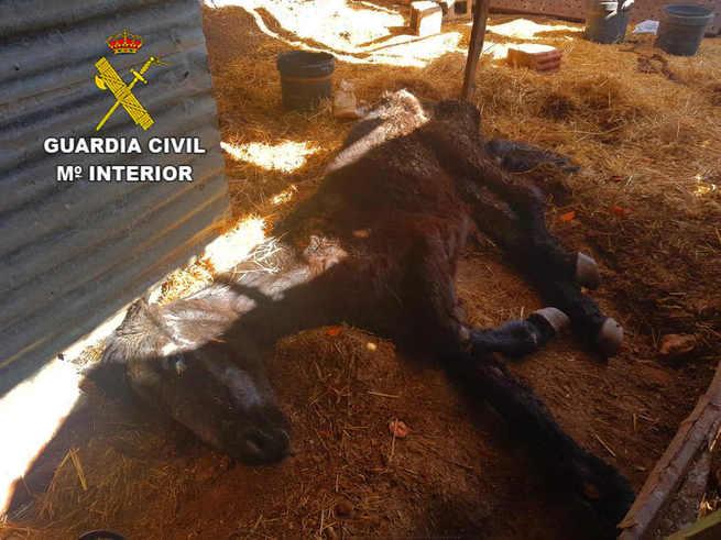 La Guardia Civil investiga a un hombre por maltrato animal de un caballo en Carrión de Calatrava