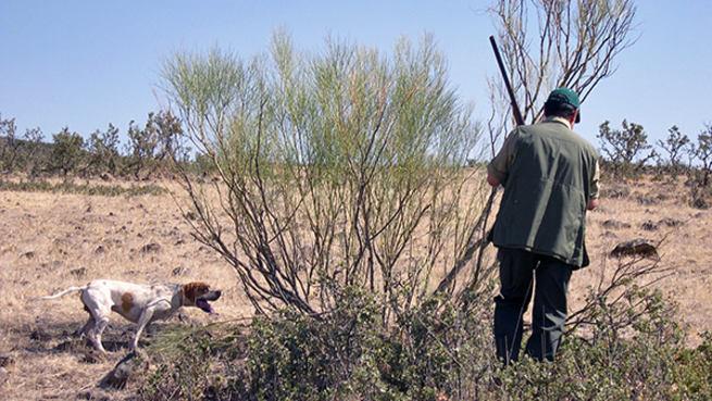 Imagen: Federación Caza de CLM oferta jornadas caza menor, caza con galgo y monterías