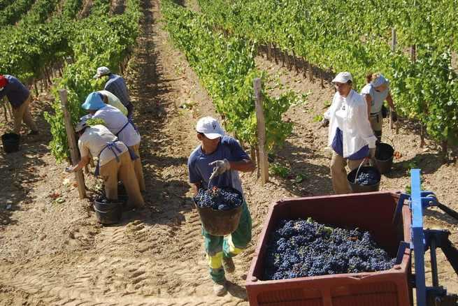 Imagen: Martínez Arroyo pide a viticultores que sigan apostando por mejorar calidad