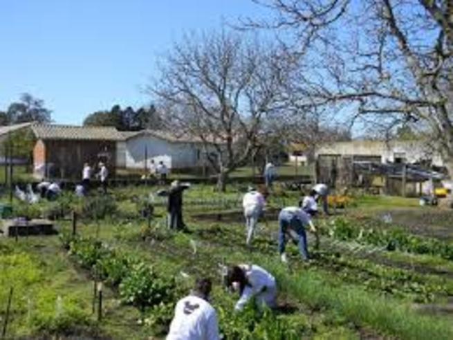imagen de Los beneficiarios de los huertos urbanos en Porzuna comienzan ya a labrar la tierra y a sembrar los primeros cultivos