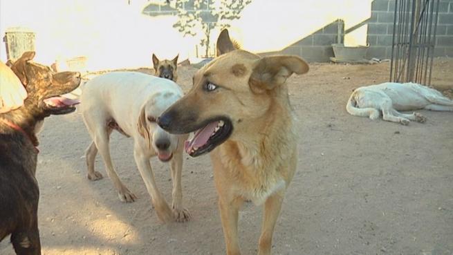 Imagen: Las perreras municipales y protectoras de animales se ven saturadas durante el periodo estival