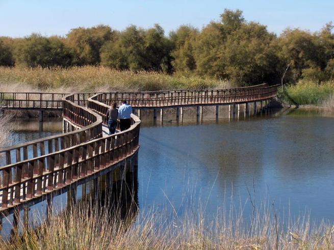 Imagen: El Parque Nacional de las Tablas de Daimiel comenzó su proceso para adherirse a la Carta Europea de Turismo