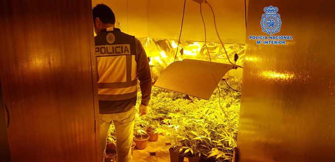 La Policía Nacional ha desmantelado en Talavera un nuevo laboratorio clandestino donde se cultivaba marihuana